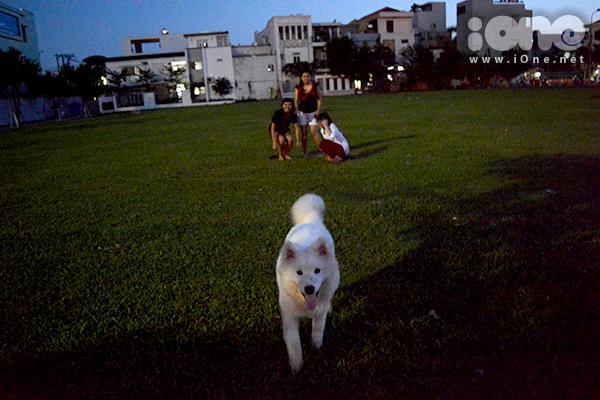 hay những chú chó chạy nhảy khỏe khoắn ở công viên là hình ảnh thường thấy ở Đà Nẵng khi phong trào nuôi, dắt chó cưng ra phố nở rộ. Những chú chó cảnh thường được yêu thích vì sự thông minh.