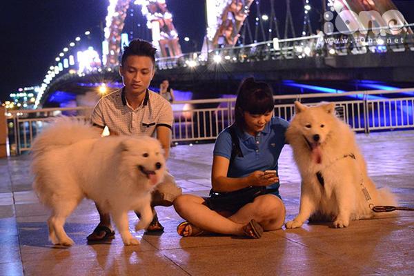 Theo bạn Huỳnh Đăng An, 1991, một thành viên của hội Chó cảnh Đà Nẵng, phong trào này chỉ mới phát triển. Hội nuôi chó cảnh ở TP Đà Nẵng gồm gần 50 thành viên với gần 100 loại chó: Samoyed, Husky Sibir, Alaska, Pitpull, Rottweiler, Bull Pháp...