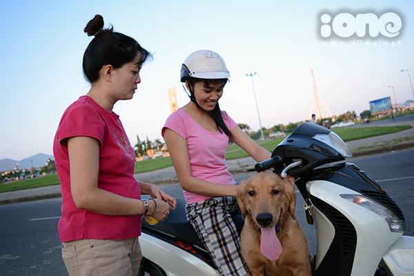 Giá của các loại chó khá cao, tùy vào tuổi và độ đẹp, các chú chó có giá từ 8-14 triệu. Giá có thể lên đến hàng chục triệu (40 triệu, 60 triệu, 100 triệu...) với những chú chó có giấy tờ nhập từ nước ngoài.