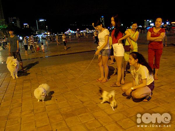 Các bạn nữ thường nuôi những chú chó nhỏ nhắn, dễ thương như Phốc Sóc, chó Xù lai& trong khi các bạn nam nuôi những chú chó lai có ngoại hình giống chó săn như Samoyed, Alaska, Husky Sibir&