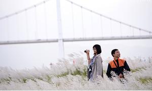 Teen Đà Nẵng mê mẩn đồng cỏ lau đẹp như phim Hàn