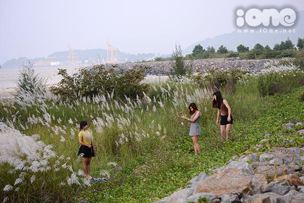 Cỏ lau bung nở khi tiết trời miền Trung vào những ngày cuối thu se lạnh. Cảnh sắc nhiều khu vực như cầu Thuận Phước, núi Sơn Trà thường trở nên thơ mộng như xứ thần tiên vào dịp này.
