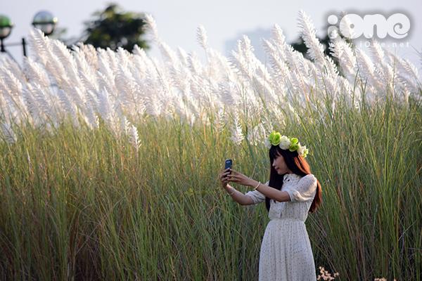 Cỏ lau trắng mọc ngút ngàn, cao hơn đầu người. Một thiếu nữ tìm những góc đẹp để chụp Selfie.