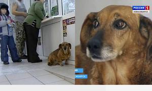 Chú chó chờ ở bệnh viện hai năm dù chủ đã qua đời