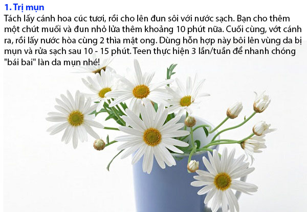 hoa-cuc-1-3367-1417967462.jpg