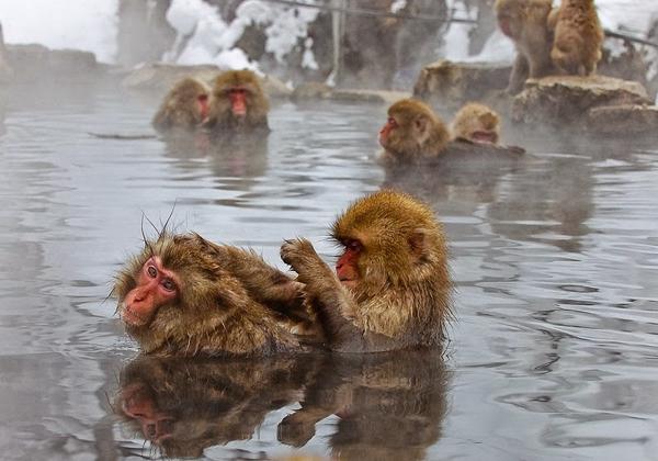 snow-monkey-japan-5-9474-1418271941.jpg