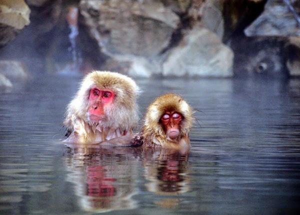 snow-monkey-japan-8-4348-1418271941.jpg