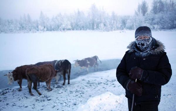 Ở Oymyakon, nguồn thực phẩm rất khan hiếm vì thực vật không thể tồn tại. Người dân ở đây đều săn tuần lộc, bắt cá, nuôi ngựa, bò làm thức ăn và lấy sữa.