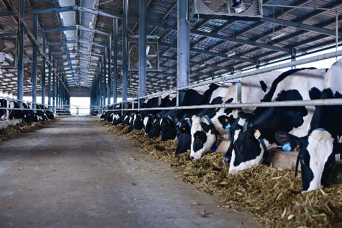 Tổng đàn bò cung cấp sữa cho Vinamilk hiện nay bao gồm các trang trại của đơn vị này, bà con nông dân có ký kết hợp đồng bán sữa và mỗi ngày cung cấp gần 600 tấn sữa tươi nguyên liệu.