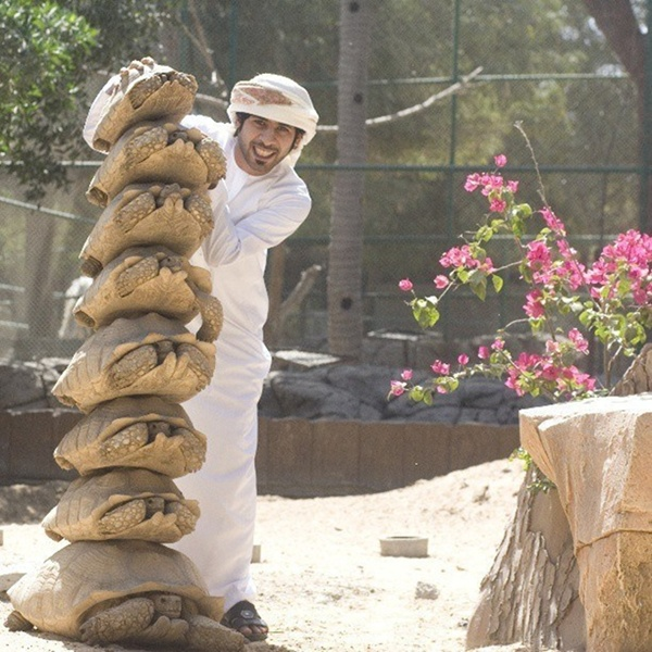 Chơi trò xếp hình tháp bằng những con rùa thật, trò tiêu khiển chưa từng thấy của một tay nhà giàu Dubai.