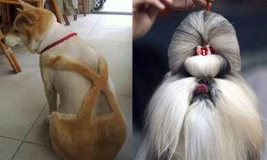 Thời trang cắt tỉa lông đặc sắc cho cún cưng