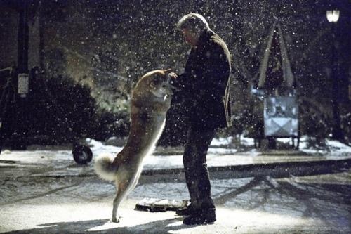 hachiko-dog-2-6036-1423628842.jpg