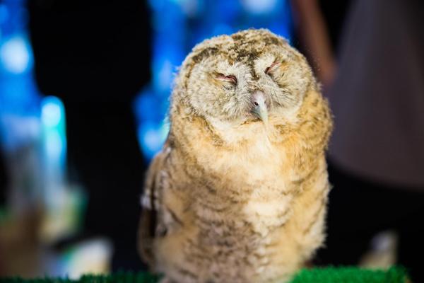 owl-cafes-japan-7-7262-1425013597.jpg