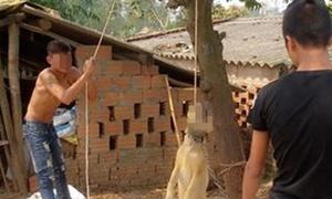 Nhóm thanh niên buộc chó treo ngược lên cây gây phẫn nộ