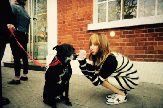 Suzy đang chụp ảnh trên phố, thấy chó đẹp là cô nàng