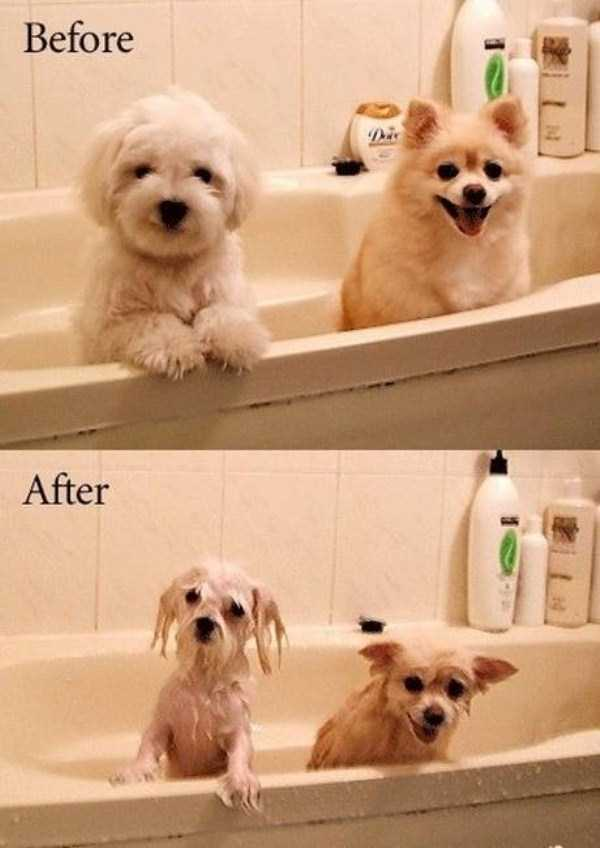 before-and-after-9-9022-1427036313.jpg