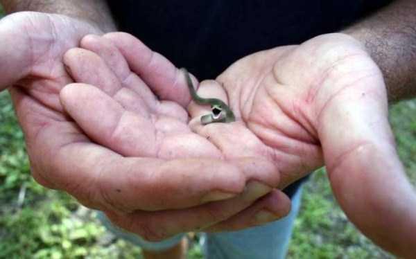 cute-snakes-10-4622-1427081987.jpg