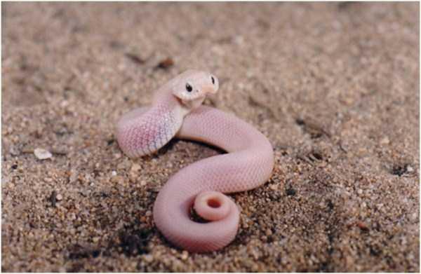 cute-snakes-7-5502-1427081982.jpg