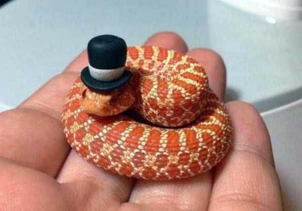 cute-snakes-9-9371-1427081986.jpg