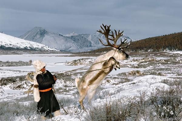 Người Dukha sống dựa vào việc chăn thả tuần lộc trong những khu rừng tuyết, nơi nhiệt độ có   thể xuống tới âm 53 độ C. Thời tiết giá lạnh này lại là điều kiện thích hợp để nuôi dưỡng tuần   lộc.