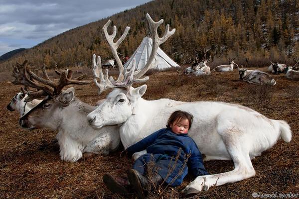 Nhiếp ảnh gia kiêm học giả Hamid Sardar-Afkhami đã hé lộ cho người xem những hình ảnh   chưa từng thấy về cuộc sống hàng ngày của người dân du mục Dukha (còn được biết đến với   tên gọi là bộ tộc Tsaatan) sống ở phía Bắc Mông Cổ.