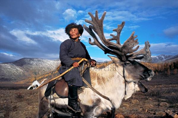 reindeer-people-hamid-sardar-a-4767-4308