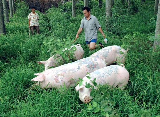 tattooed-pigs6-9631-1427336814.jpg