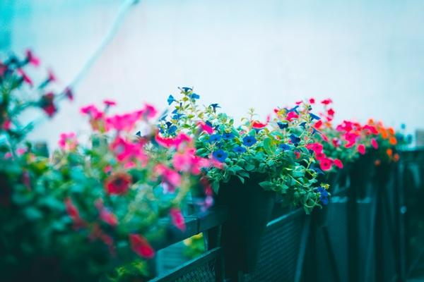 Trên gác cao lãng mạn dành riêng cho các cặp đôi, từng chậu hoa nhỏ được bố trí xen kẽ một cách tinh tế,