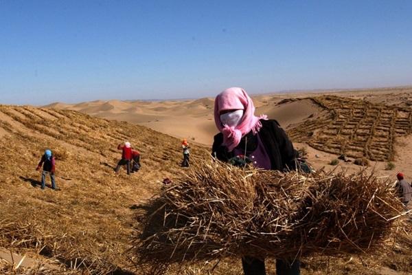 Thị trấn Minqin, Trung Quốc đang dần bị sa mạc hóa và hoàn toàn thiếu vắng bóng dáng sự sống. Chỉ tầm 20 năm nữa thôi, khu vực này được dự đoán sẽ biến mất.