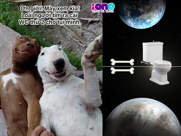 02 - Text : Thế giới này là WC của chúng mình  phóng tác theo ý tưởng hài Thế giới qua cách nhìn loài chó