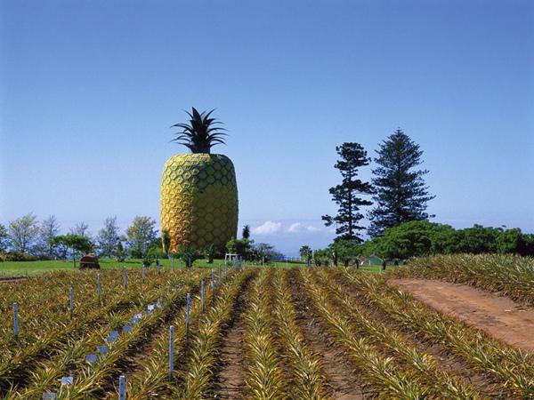 Tòa nhà Big Pineapple ở Nam Phi: Tòa nhà cao gần 17m và nằm trên đồn điền trồng dứa Summerhill Estate.