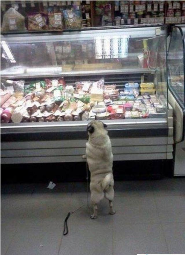 Khi các em cún hí hửng đi shopping