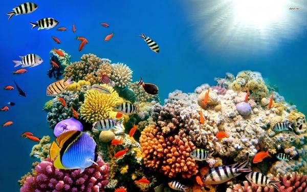 Rặng san hô Great Barrier Reef ở Australia Rặng san hô Great Barrier Reef là hệ thống đá ngầm san hô lớn nhất thế giới, bao gồm khoảng 2.900 tảng đá ngầm riêng rẽ và 900 hòn đảo, trải dài hơn 2.600Km, bao phủ một vùng diện tích xấp xỉ 344.400Km2.