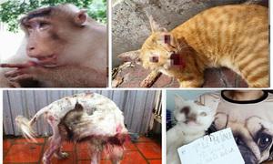 Những hành vi ngược đãi, hành hạ động vật gây phẫn nộ