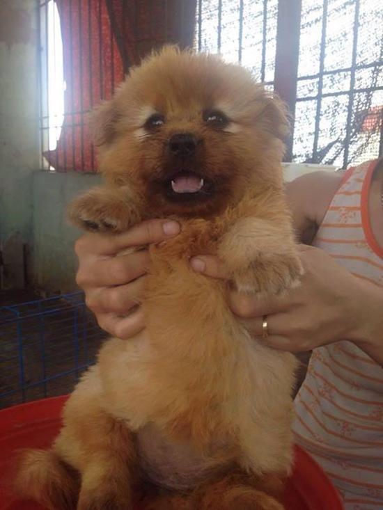 Chú cún nhà bạn Hưng Phạm