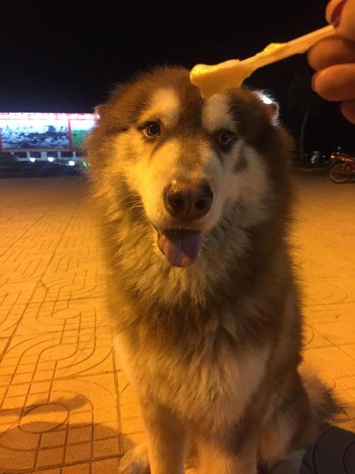 Chân dung chú chó lém lỉnh siêu đáng yêu trong clip. Ảnh: Mật Pet Family.