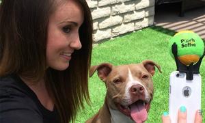 Dụng cụ selfie chuyên dành cho cún cưng