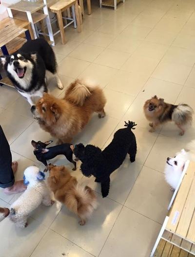 Những bé thú cưng trong quán cà phê của Hoàng Duy.