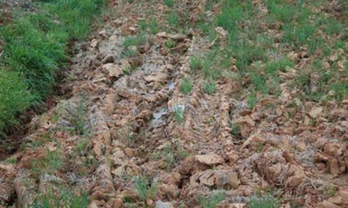 Đố vui: Tìm chú mèo lơ ngơ giữa bãi đất hoang