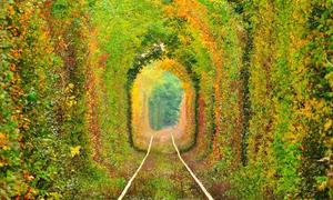 6 khu rừng bật mí thế giới nội tâm của bạn