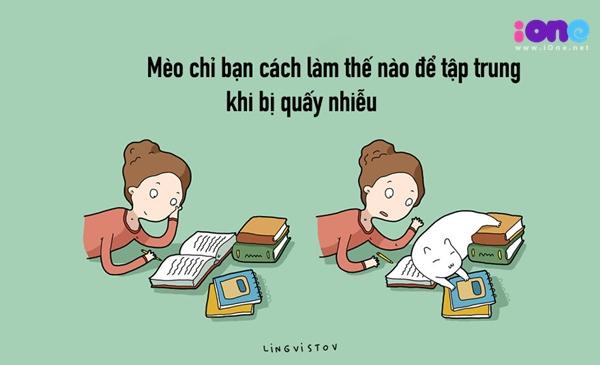 12-dieu-ban-co-the-hoc-duoc-tu-nhung-chu-meo-quai-chieu