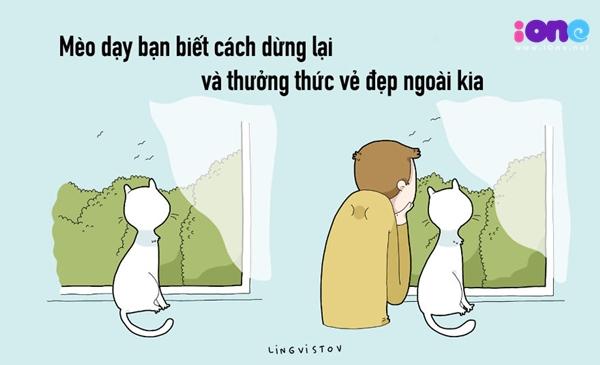 12-dieu-ban-co-the-hoc-duoc-tu-nhung-chu-meo-quai-chieu-11