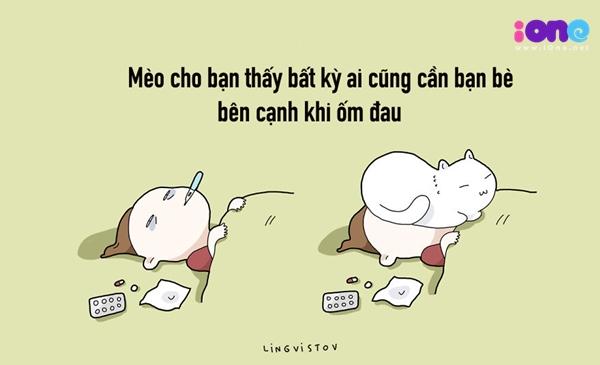 12-dieu-ban-co-the-hoc-duoc-tu-nhung-chu-meo-quai-chieu-1