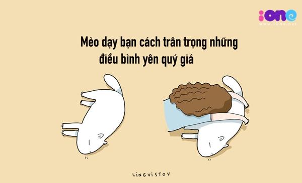 12-dieu-ban-co-the-hoc-duoc-tu-nhung-chu-meo-quai-chieu-3