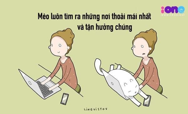 12-dieu-ban-co-the-hoc-duoc-tu-nhung-chu-meo-quai-chieu-5