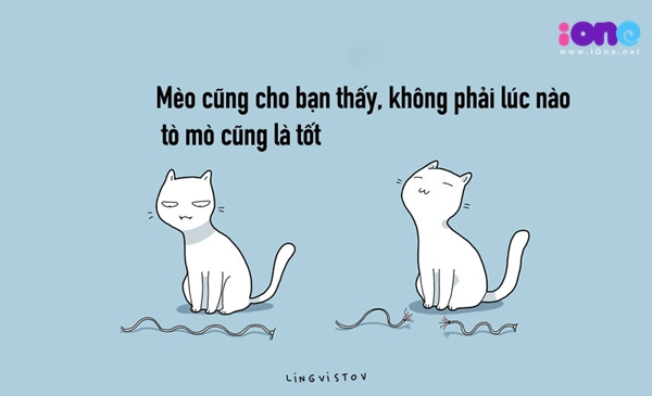 12-dieu-ban-co-the-hoc-duoc-tu-nhung-chu-meo-quai-chieu-8