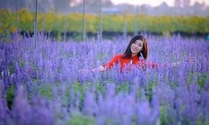 Nhiếp ảnh trẻ xin lỗi vì loan tin ở Đồng Nai có vườn hoa oải hương