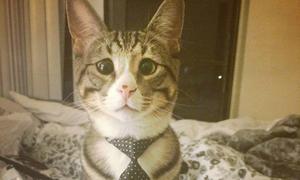 Chú mèo 'mắt lác' được hâm mộ cuồng nhiệt trên Instagram