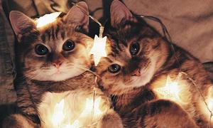 Tình bạn thân thiết của đôi mèo cưng từng bị bỏ rơi