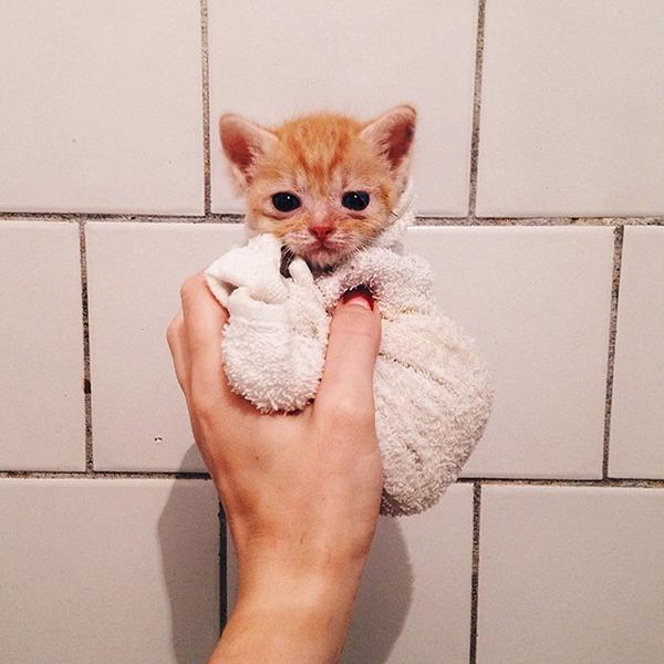 Cả hai chú mèo đều rất non nớt vì chỉ mới vài ngày tuổi. Anya quyết định đưa hai chú mèo về nhà mình nuôi.